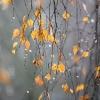 В первый день ноября температура в Омске достигнет +8 °C