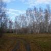 В Омской области «черных лесорубов» будут ловить с поличным с помощью фото и видеофиксации