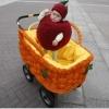 В Омске прошел традиционный парад детских колясок