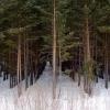 В Омске посчитали приживаемость деревьев