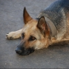 В омском парке отравили домашних собак