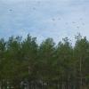 В Омской области сельчанина насмерть придавило деревом