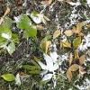 На выходных в Омской области может выпасть снег