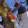 В Днепре спиливают деревья, вызывающие аллергию