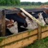 Начинающим омским фермерам выделили ещё более 90 млн рублей