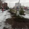 Рядом с омской магистралью высаживают 20 сосен