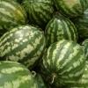 В Омскую область в очередной раз не пропустили арбузы из Казахстана