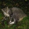В Омске на 7-й Линии в ДТП попала кошка с коротким хвостом