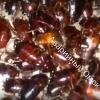 Похожие на тараканов насекомые атаковали тепловой коллектор в Омске