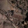 В Омской области нашли скелеты людей, обнявшие друг друга