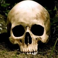 В Омской области на сенокосе нашли скелет мужчины