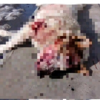 Омич сообщил о страшной расправе бомжей над собакой