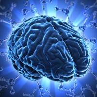Ученые вырастили мини-мозг