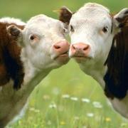 Омская область получит 343 миллиона на сельское хозяйство