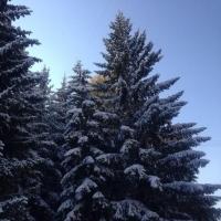 Омск ожидает морозная бесснежная неделя