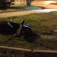 Мопед не мой: омичи нашли брошенное транспортное средство