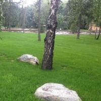 Для омских газонов закупят  семена газонной травы на 700 тысяч рублей