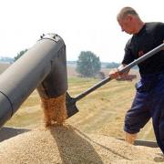 Омская область выкупила 9 тысяч тонн пшеницы из госзапаса