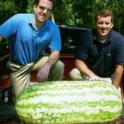 Самые большие фрукты и овощи.