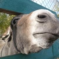 В Омске пройдет плановая вакцинация животных