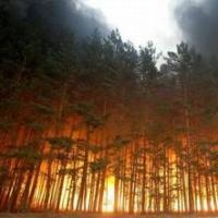 В Омской области сохраняется повышенная пожароопасность