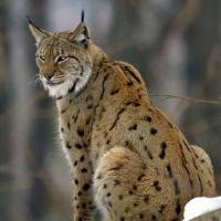 Министра окружающей среды Польши обвинили в браконьерстве
