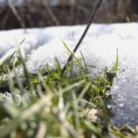 Глава омского Минсельхоза надеется, что потеплеет в регионе не скоро