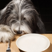Какой выбрать корм для собак