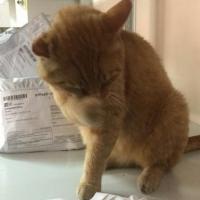 В Омске кот Рыжий решил, что на «Почте России» ему лучше, и вернулся