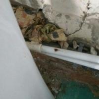 Соцсети: омичка пожаловалась на засилье тараканов в ГКБ №1