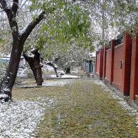 Шквалистый ветер принес в Омскую область похолодание