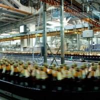 Производитель «САН ИнБев» использует омский ячмень для пивоварения