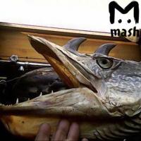 Ученый объяснил появление рогатых щук в Иртыше