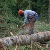 Скандальные Тарские леса начнут работать на омскую экономику