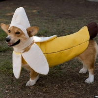 В Омске пройдет костюмированный бал для собак «Крутой дворянин»