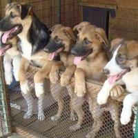 Омское «Спецавтохозяйство» закупит сухой корм для бродячих собак