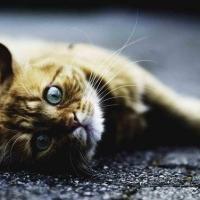 Бюджетное питание для кошек: почему не стоит экономить
