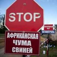 Чуму свиней нашли в Ленинском округе Омска