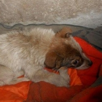 В Омске пес спас щенка, выброшенного на помойку