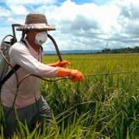 Продажа и хранение пестицидов