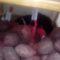 Омичи заступились за кота, отдыхавшего в магазине на полке с картошкой
