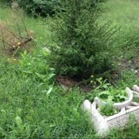 Мэру Омска внесено представление по фактам нарушений в озеленении города