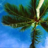 Омские пляжи будут официально открыты к 20 июня