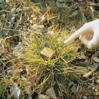 В омских лесах разбросали 108 доз оральной вирусвакцины для плотоядных животных