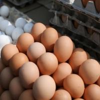 Омичи переплачивают накрутку в 100 % на молоко и яйца