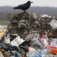 Депутаты предложили построить на месте омского мусорного полигона курорт