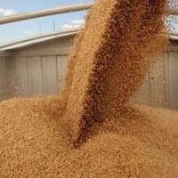 Омская область занимает вторую строку рейтинга СФО по урожаю зерновых