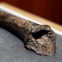 Реконструкцию кости Усть-Ишимского человека покажут омичам в формате 3D