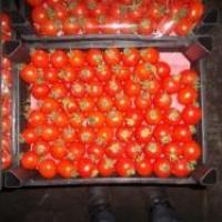 В Омской области уничтожили 143 килограмма санкционных томатов