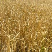 Фермеры Омской области обогнали кооперативы